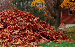 grabienie i kompost z liści